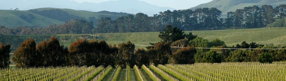 Destinations Martinborough